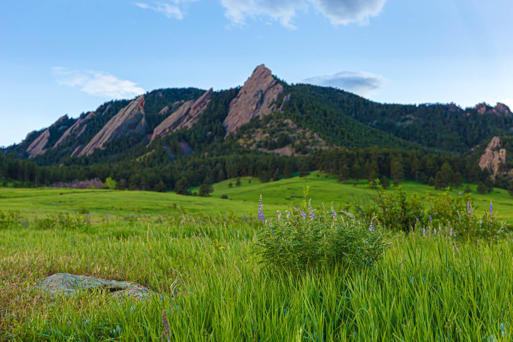 Boulder Flatiron Mountains with purple flowers - Heather Kemp Realtor